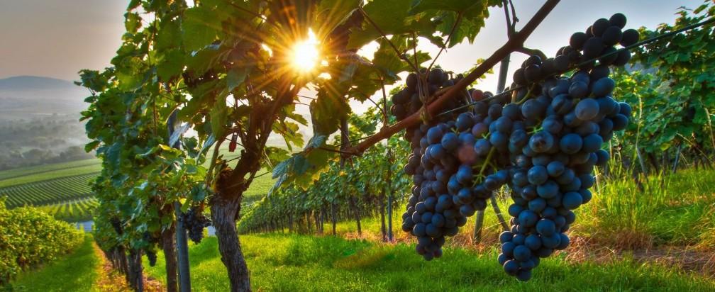 Gastronomy and wine tour Italy Croatia Austria Hungary