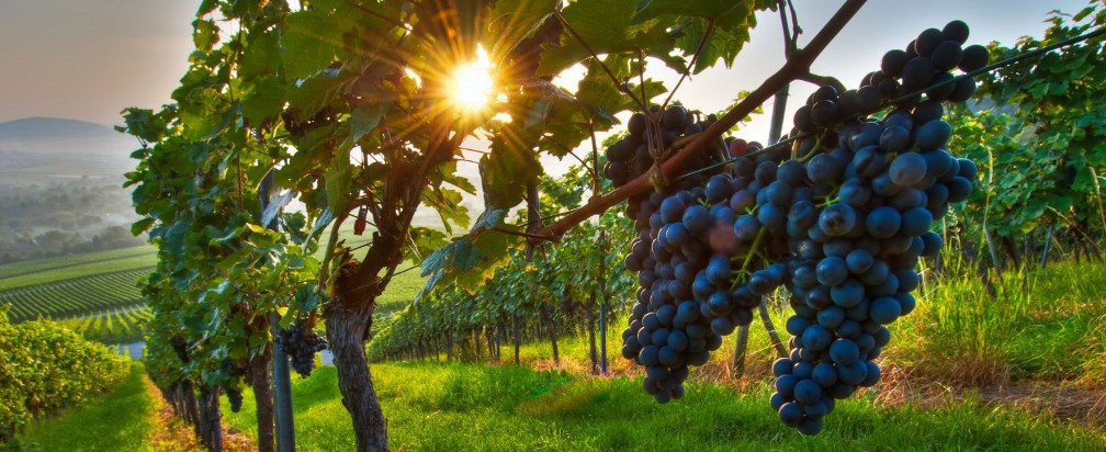 Gastronomy and wine tour Italy Croatia Austria Hungary